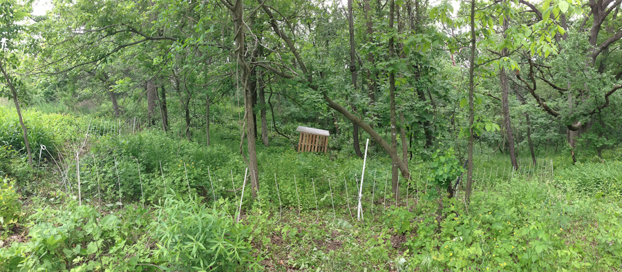 electric fence in woods