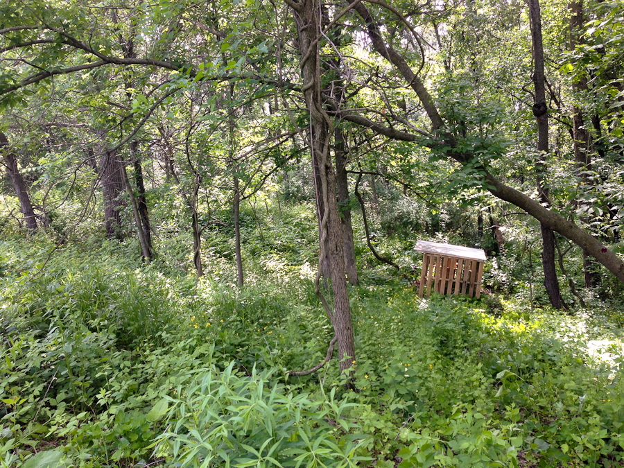 goat shelter in woods